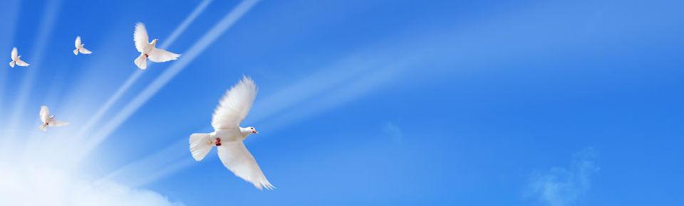 Doves01.jpg